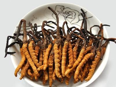 Một vài cách chế biến tốt nhất đối với đông trùng hạ thảo nguyên con
